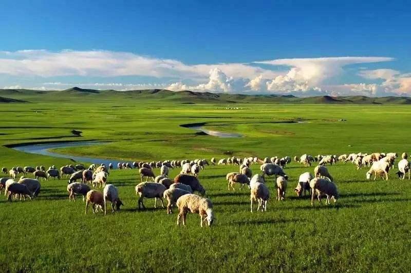 Naqu Alpine Grassland (Tibet) (Best season: May to September every year)
